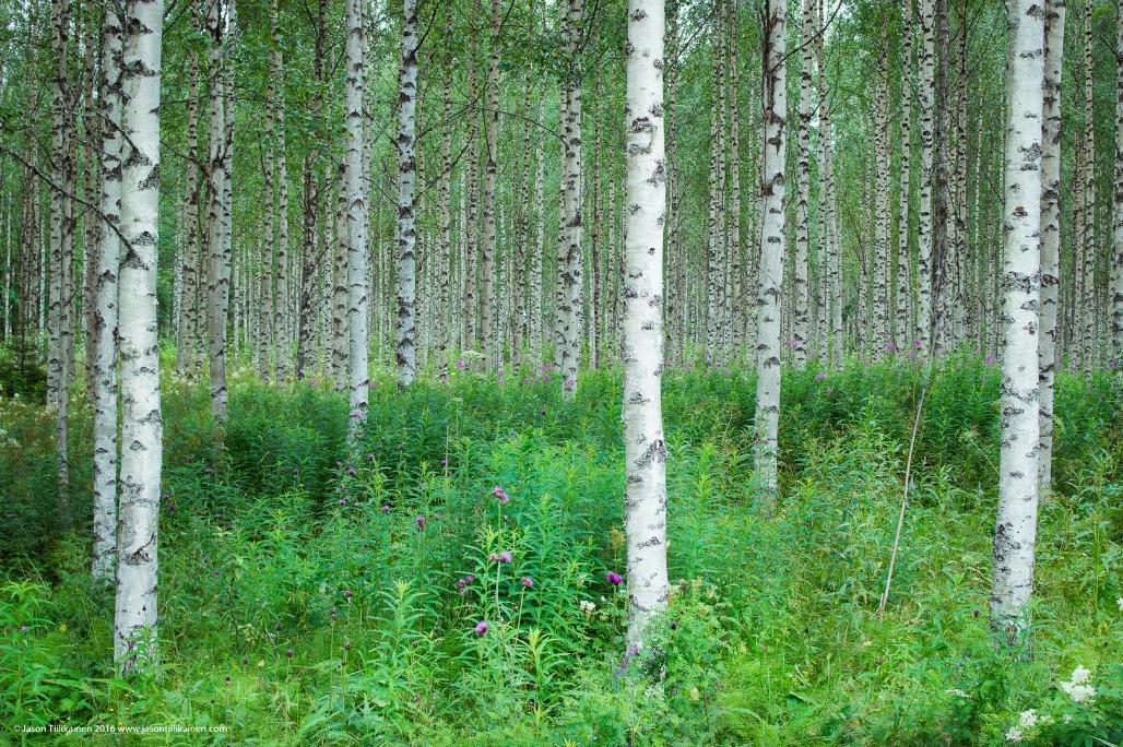 jason-tiilikainen-forest-outokumpu