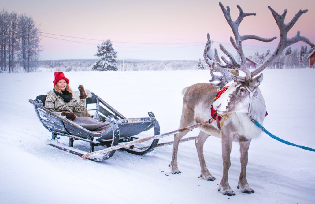 what are santa�s reindeer like � finland naturally