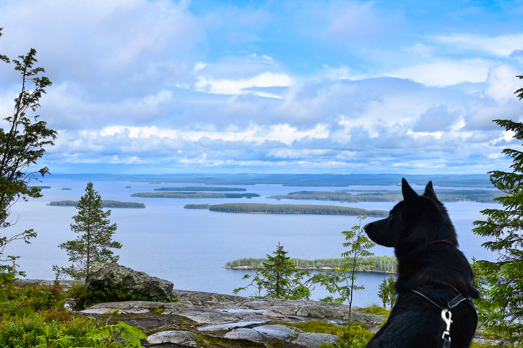The Magical Landscape Of Koli Is The Most Finnish View Ever