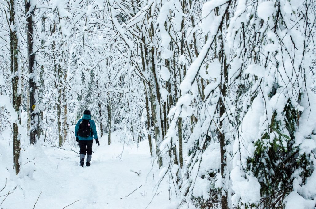 Walking in the winter wonderland at Southern Konnevesi National Park