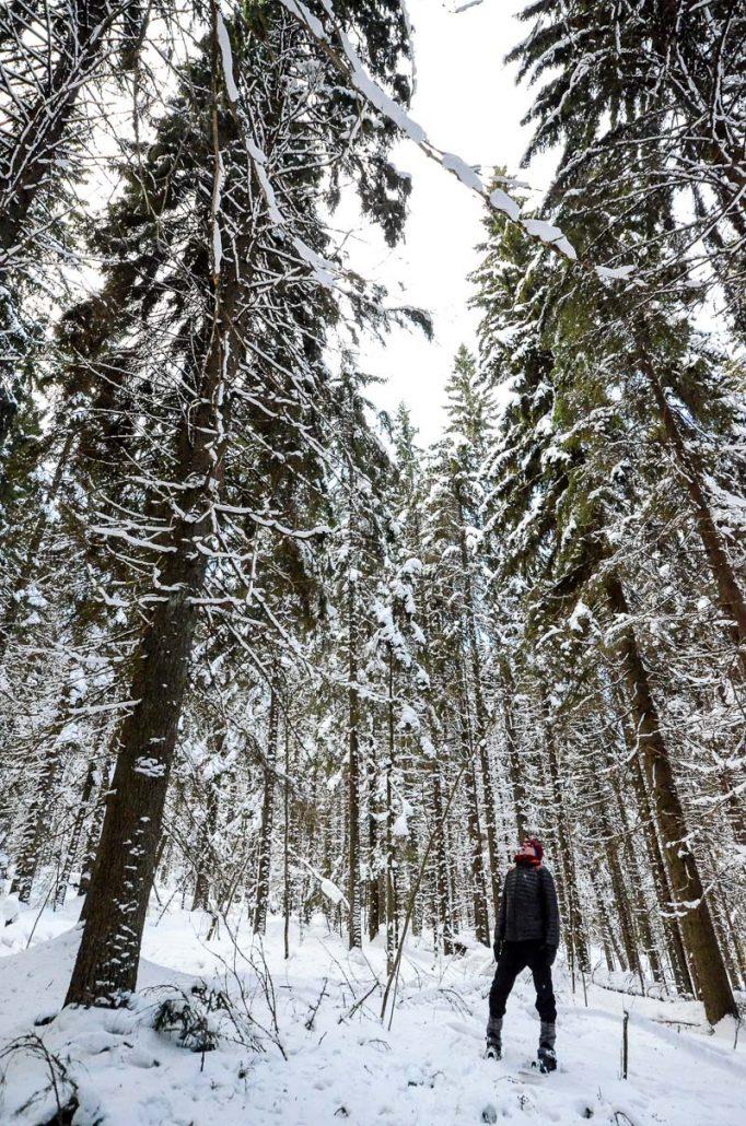 Snowshoeing at Puijo, Kuopio. Photo: Upe Nykänen