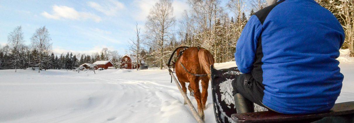 Sleighride at Konttila farm in winter, Puijo, Kuopio, Finland. Photo: Upe Nykänen