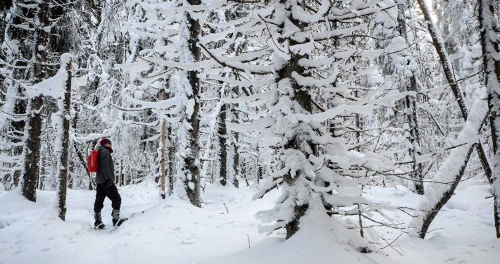 Snowshoeing in Puijo forest in winter. Photo: Upe Nykänen