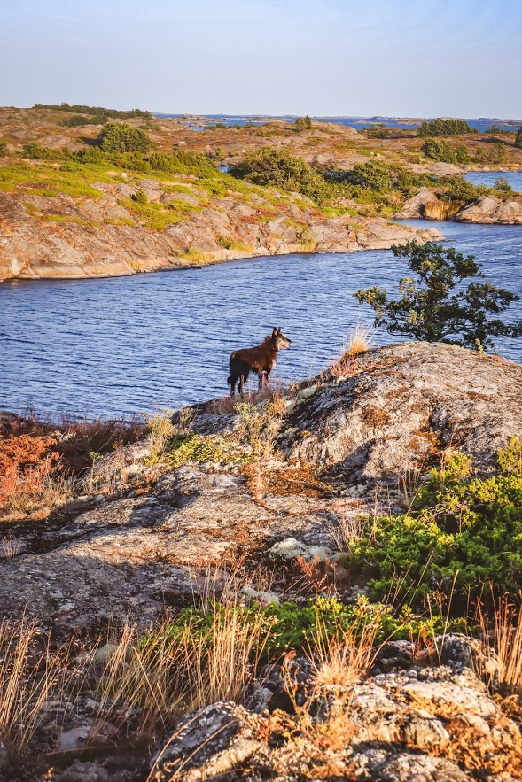 24 Hours In Kokar Finland Naturally